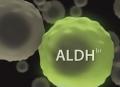 ALDEFLUOR™:干细胞荧光检测系统